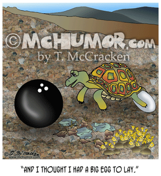 Tortoise Cartoon 8042